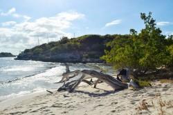 Caribbean Island sailing options